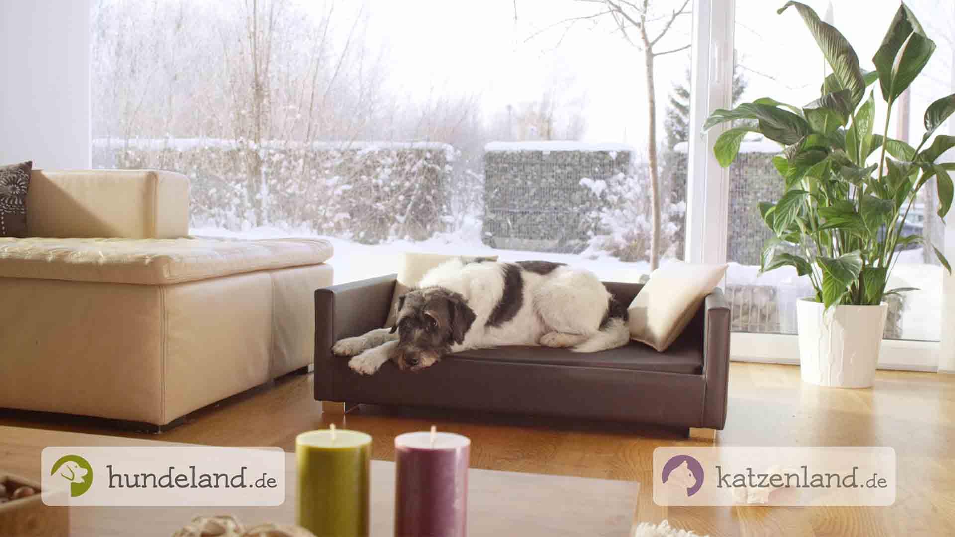 Das Bild zeigt einen Hund der in einem Hundekorb liegt. Der Hund ist schwarz und weiß befleckt. Vor ihm steht ein Tisch mit zwei Kerzen. Links steht eine grüne Kerze und neben ihr eine Animation die Hundeland.de sagt. Rechts steht eine lila Kerze neben der die Animation Katzenland.de zu lesen ist. Das Bild dient als Sliderbild für den Portfolioeintrag Hundeland Katzenland von Panda Pictures.