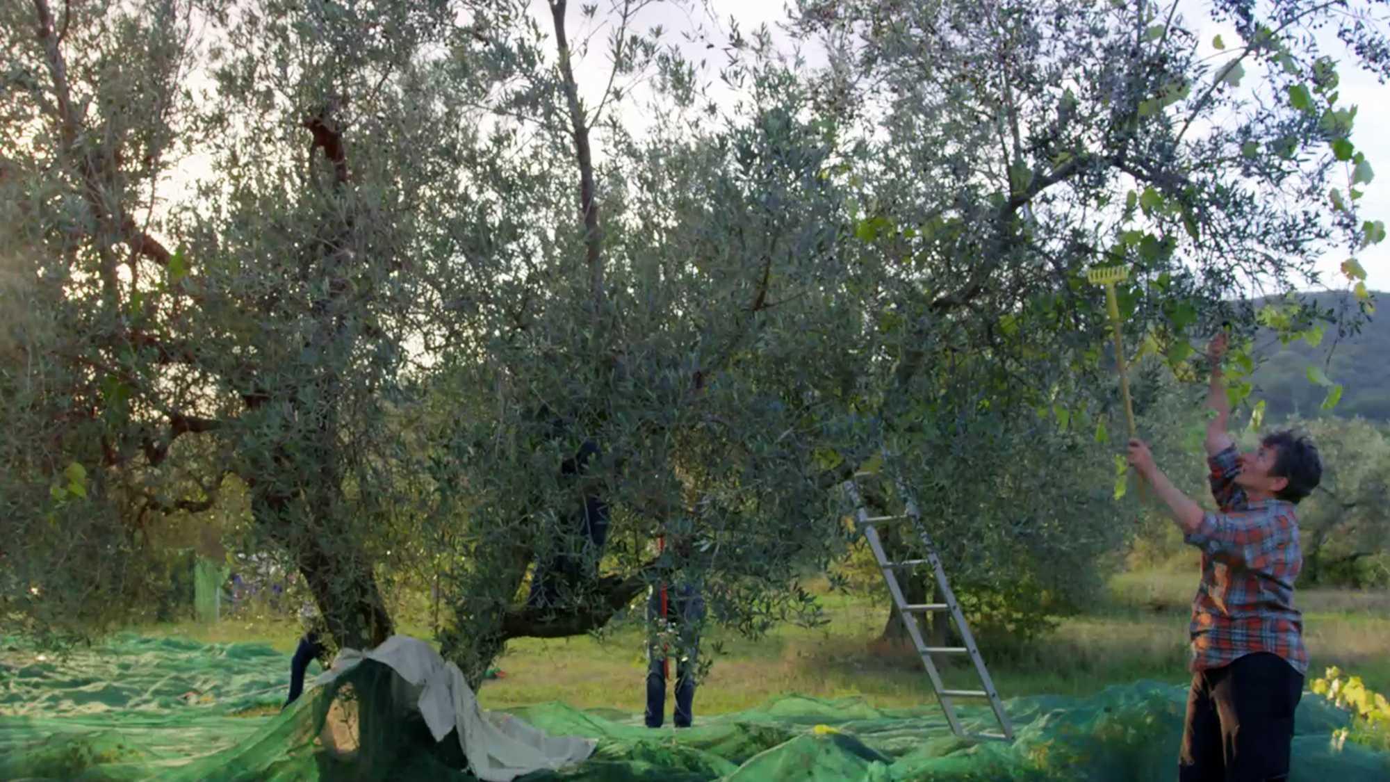 Traenen der Olive Kurzfilm