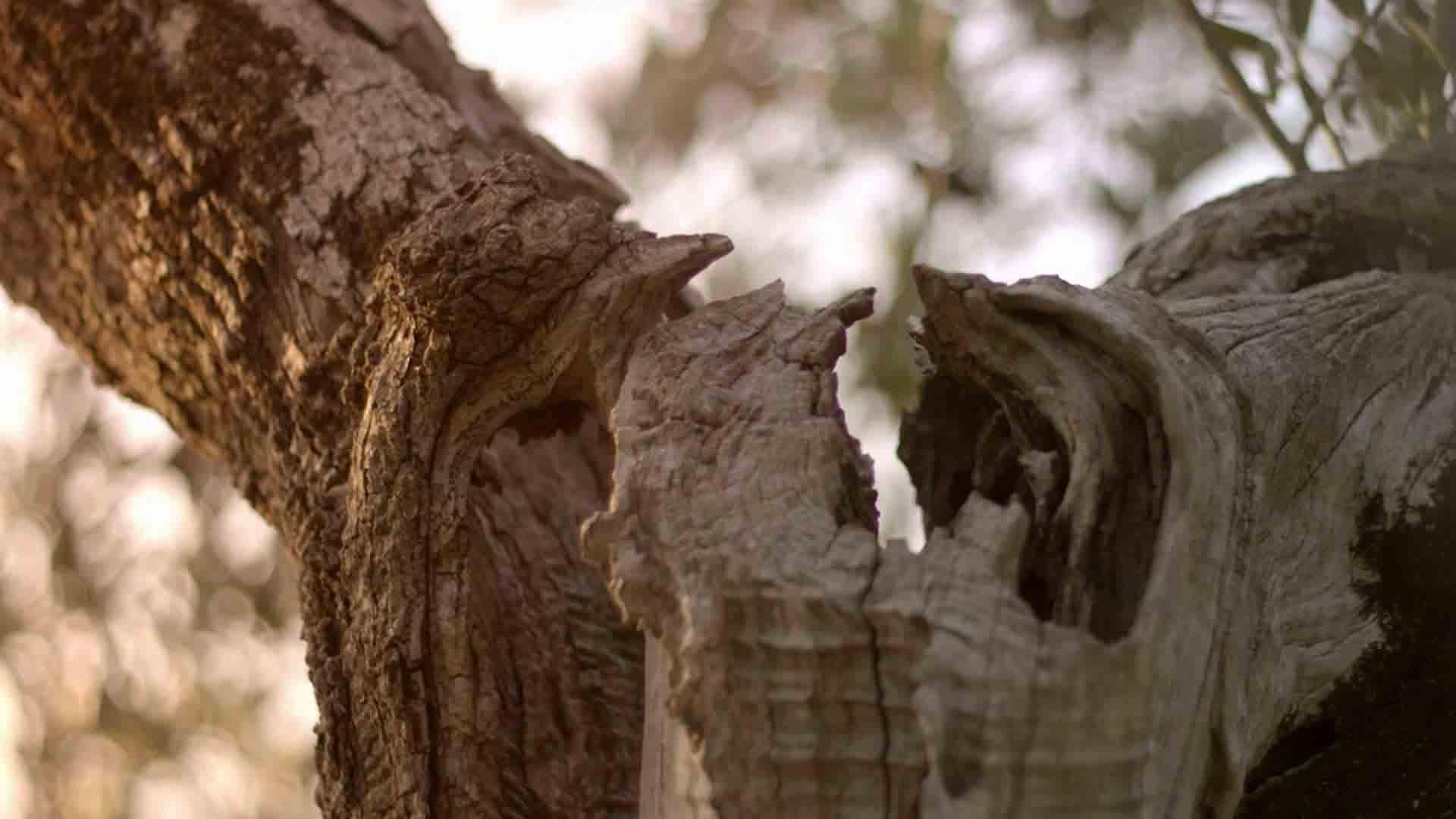 Das Bild zeigt einen braunen Ast. Die Mitte des Astes zeigt ein Loch. Der Hintergrund zeigt verschwommen die Äste und Blätter eines Baumes. Das Bild dient als Sliderbild für den Portfolioeintrag Kurzfilm Tränen der Olive von Panda Pictures.