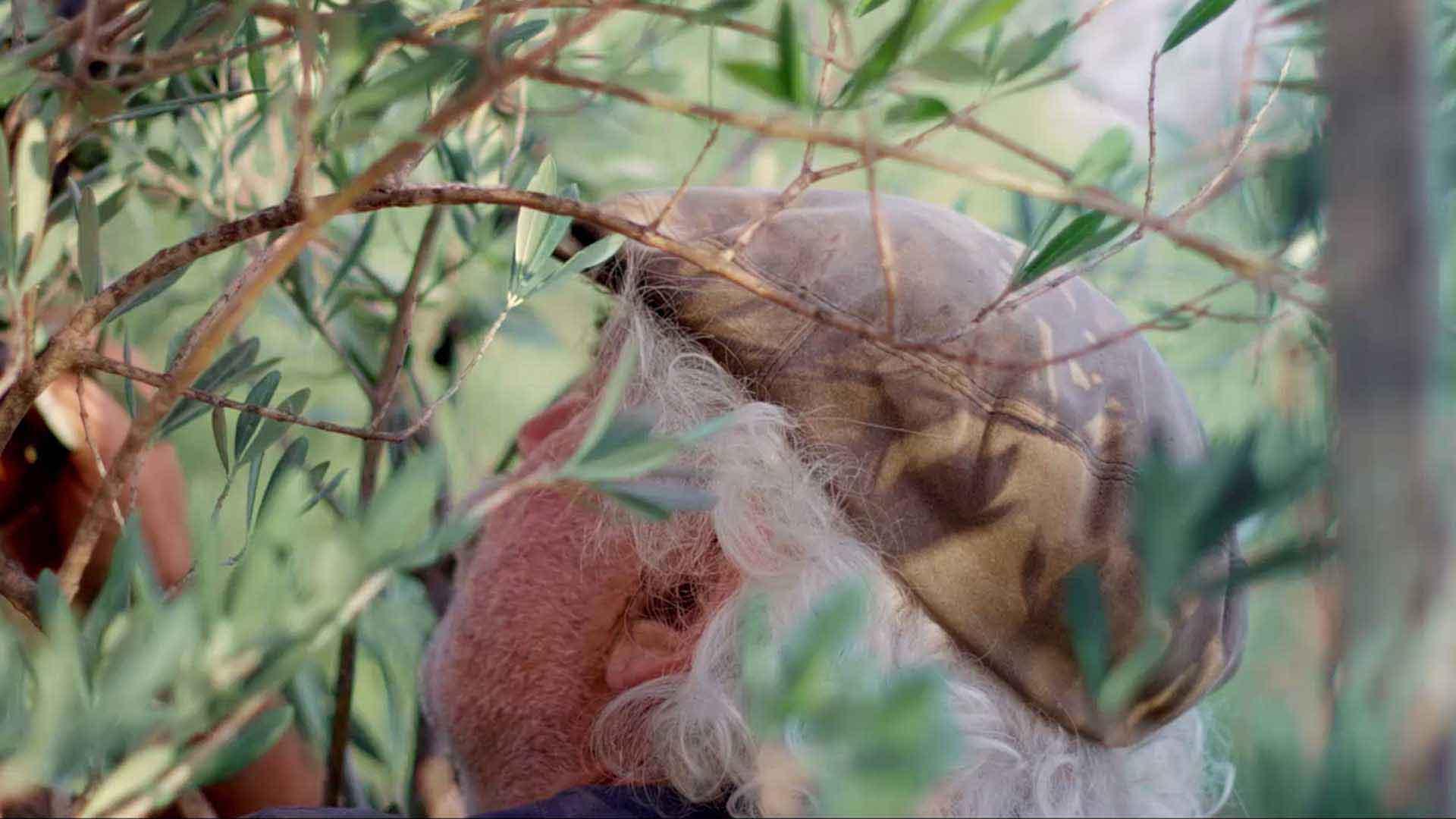 Wir sehen einen Mann. Er steht in einem Baum. Man sieht nur seinen Hinterkopf. Er trägt eine Mütze in der Farbe braun. Seine Haare sind weiß. Das Bild dient als Making Of Bild für den Portfolioeintrag Kurzfilm Tränen der Olive von Panda Pictures.
