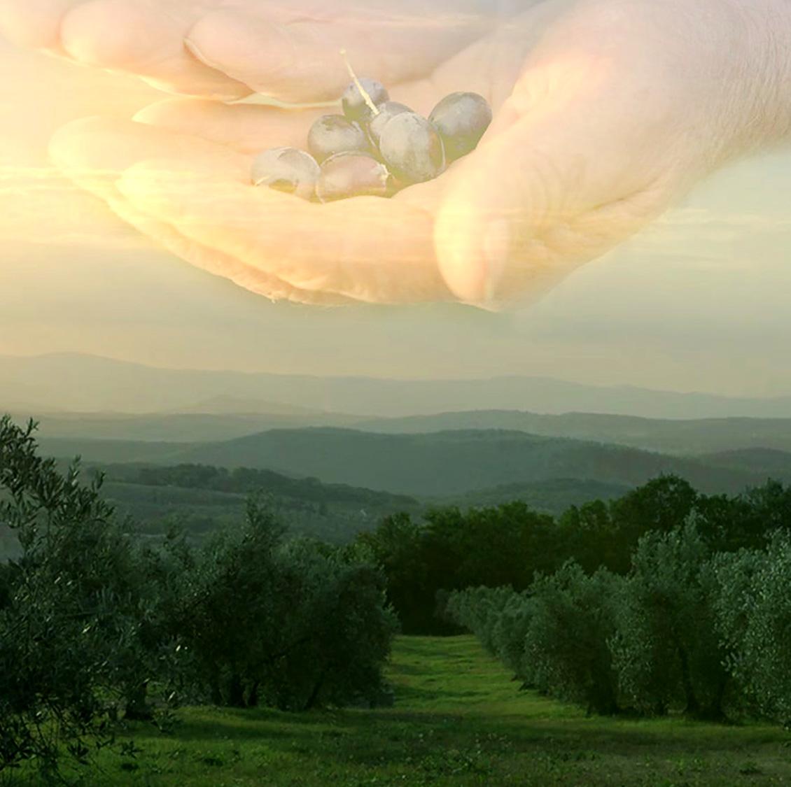 Tränen der Olive – ein Kurzfilm