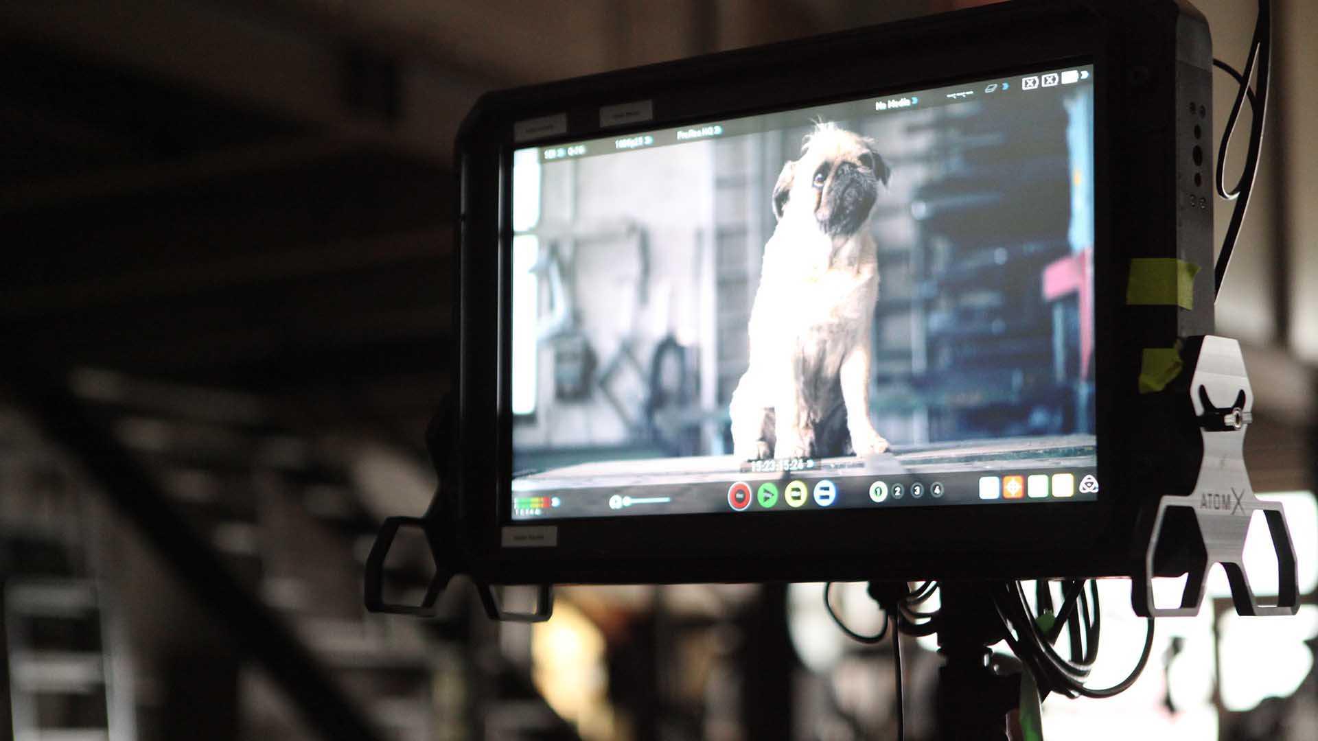 """Das Bild zeigt einen kleinen Hund auf einem Monitor. Dieser befindet sich in einer Werkstatt. Der Hund ist ein Mops mit beidem Fell und einer schwarzen Schnauze. Das Bild dient als Sliderbild für den Portfolioeintrag """"ifm Positionssensor"""" von Panda Pictures."""