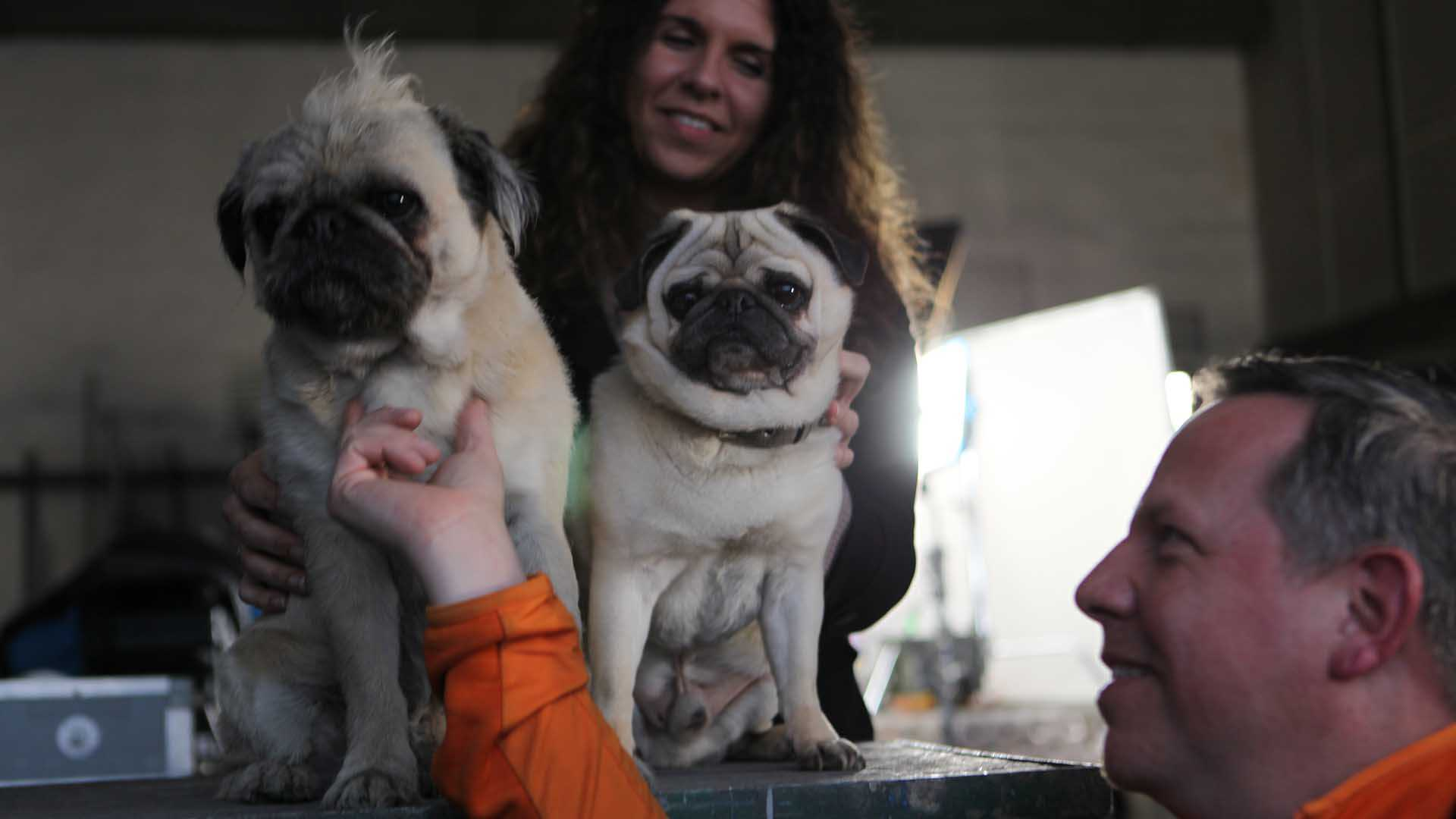 """Das Bild zeigt zwei kleine Hunde. Die Rasse beider Hunde ist Mops. Einer der beiden Hunde wird von einem Mann am Kinn gestreichelt. Dieser sitzt auf der linken unteren Hälfte des Bildes. Er trägt eine Jacke in der Farbe Orange. Hinter beiden Hunden ist eine Frau zu sehen. Das Bild dient als Sliderbild für den Portfolioeintrag """"ifm Positionssensor"""" von Panda Pictures."""