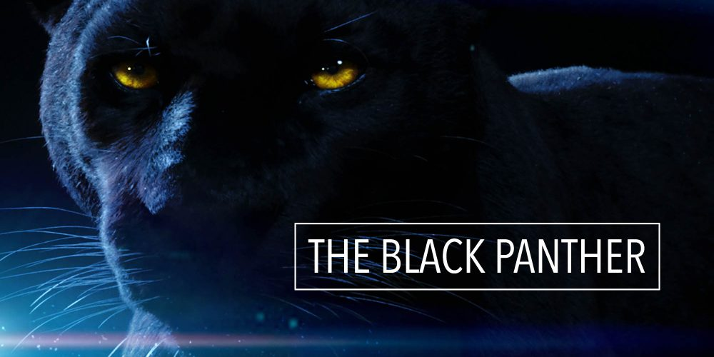 MAXIKRAFT BLACK PANTHER